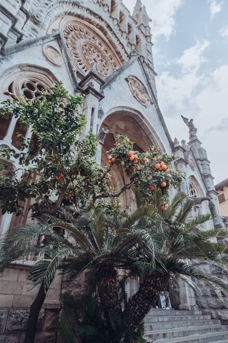 Soller Cathedral and Orange Tree